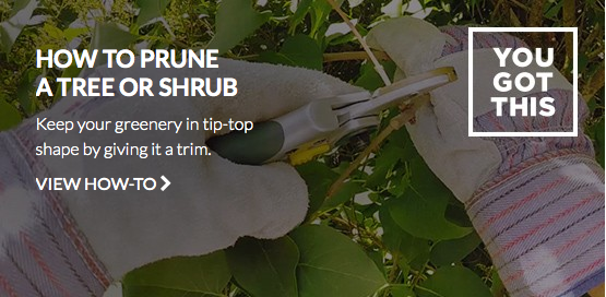 canadian-tire-how-to-prune-you-got-this